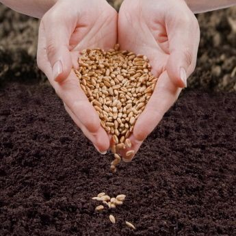 Heart shaped hands sowing seeds.