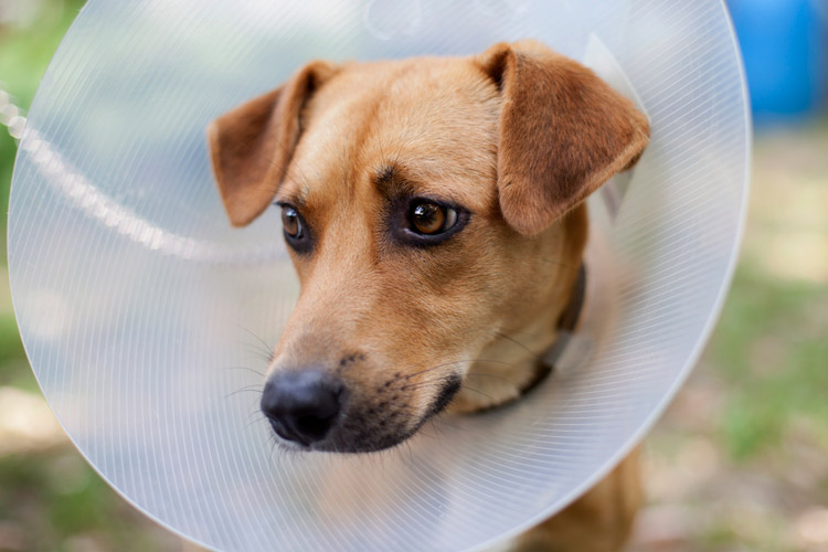 A dog with a cone on its head.