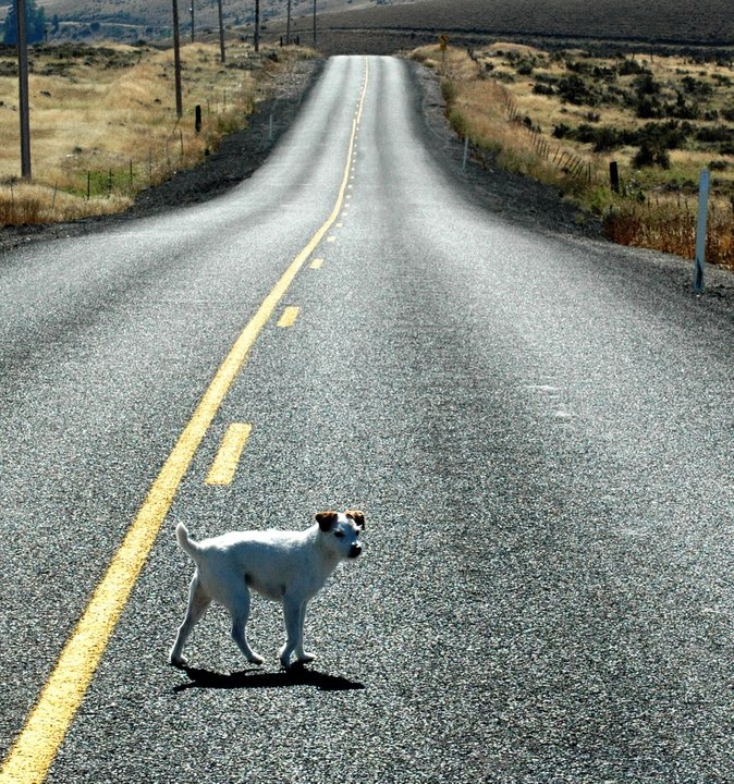 A dog in the middle of a road.