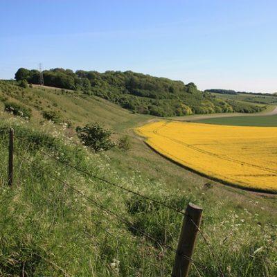 Farm hillside